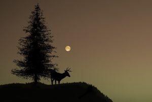 Deer using vision at night
