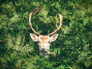 Is this deer color blind?
