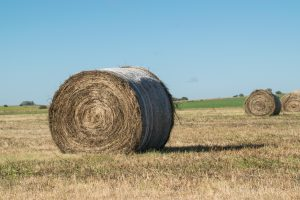 alfalfa rolls are often used to feed deer