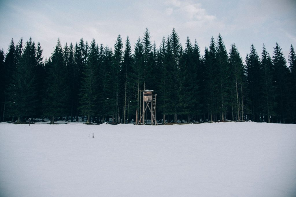 Hunting blind setup in the woods