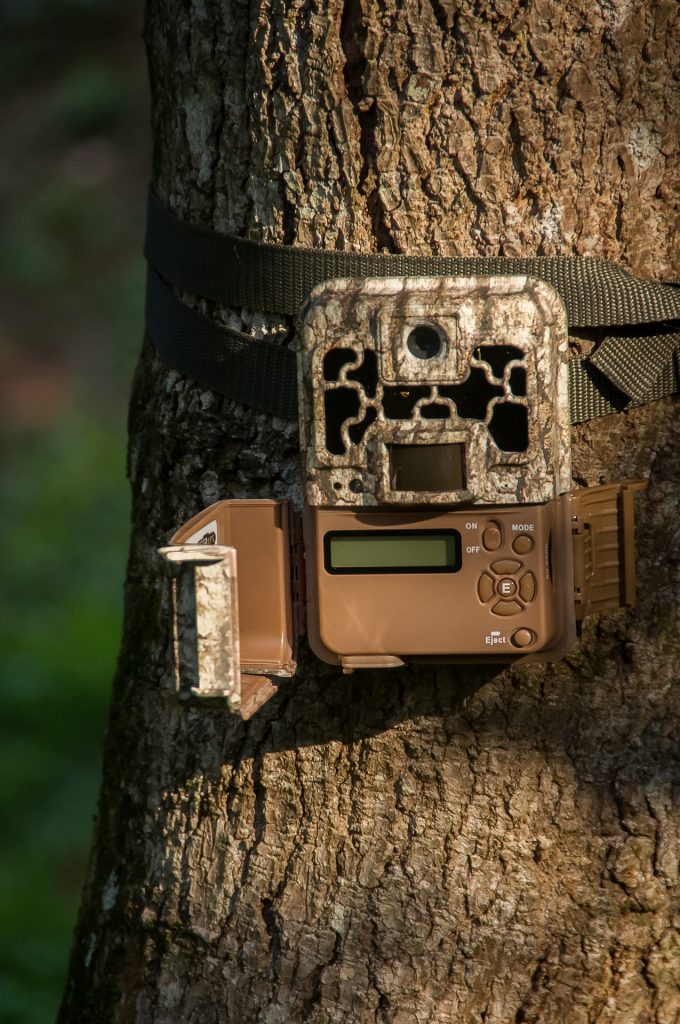 Trail camera for finding deer in the woods