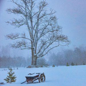 Deer cart in the snow