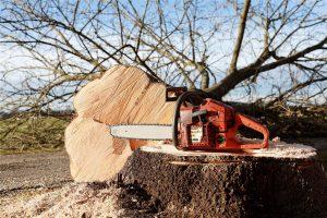 Hinge cut tree