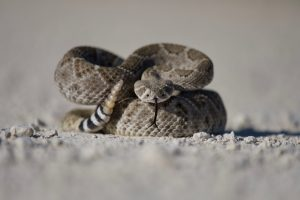 Hunting gaiters can protect against snake bites