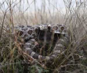 Boots can protect you from hiding snakes