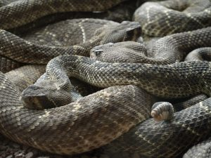 Group of snakes