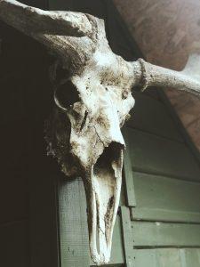 bleached-skull