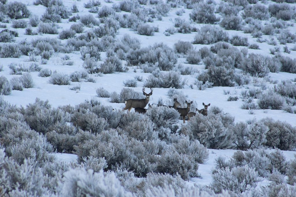 Deer out in the cold weather