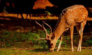 deer-feeding