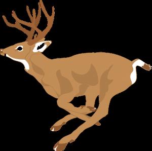 Deer can run 35 mph